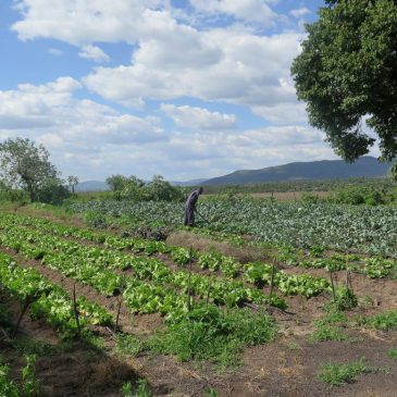 Food Security and Sustainability in Kenya