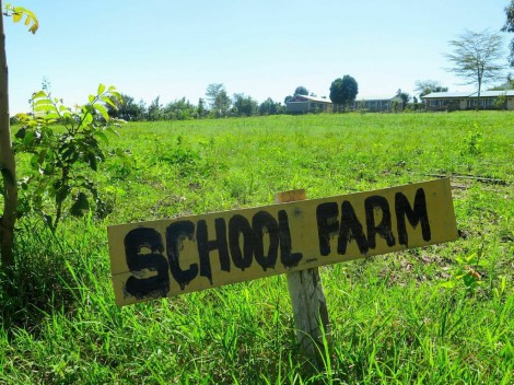 Enelerai Primary school's community garden, where students learn how to grow their own vegetables and fruits.